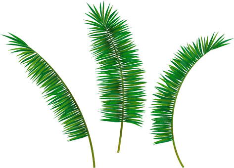 Palm leaf set