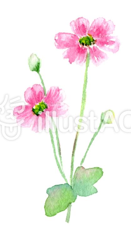 [最も人気のある!] 秋の花 イラスト 無料