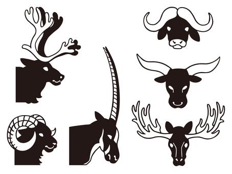 Animal horns