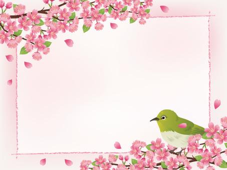櫻花春天框架,粉紅色