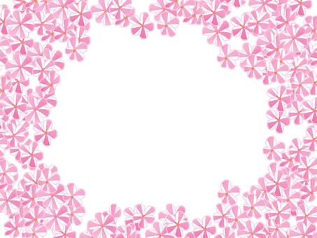 花魁草 (플록스) 4