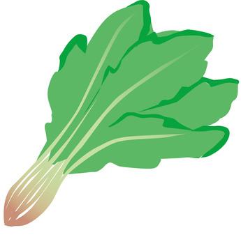Spinach b_v 8