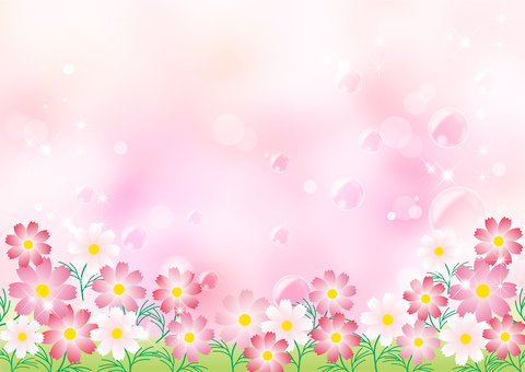 Cosmos_ pink background