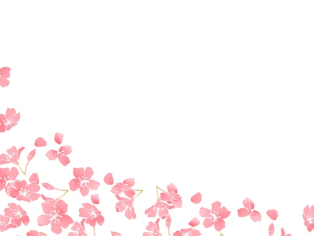 Cherry blossoms (wallpaper) 5