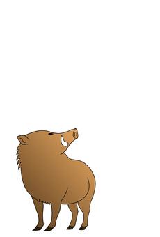 Wild boar 7