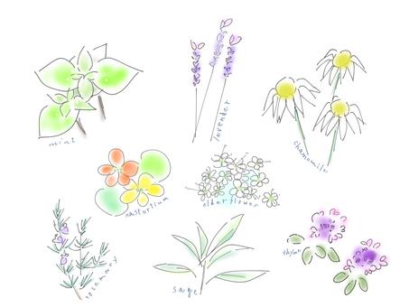 8種草藥輸入名稱