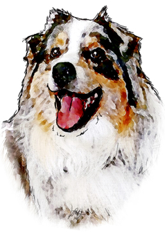 Dog's portrait 1