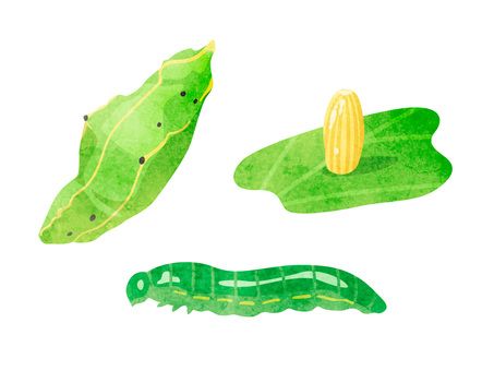 Animals _ Bugs _ White butterfly larvae _ Watercolor