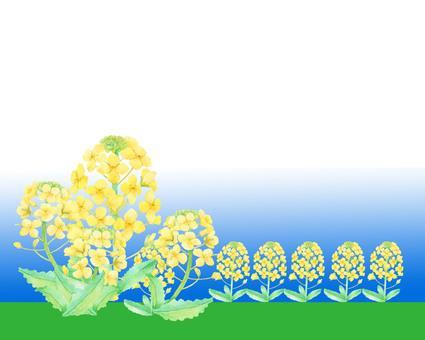 Rape flower field ★ 0016-F