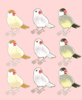 Bungo (three kinds)