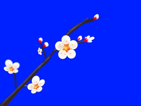 Plum branch 4