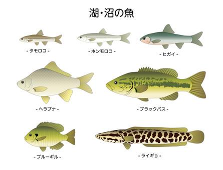 Lake and swamp fish