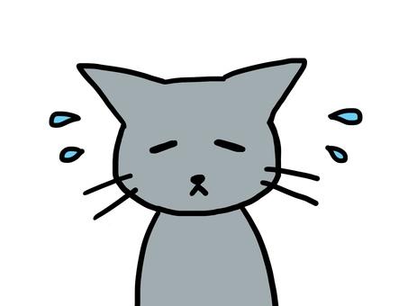 침체 고양이