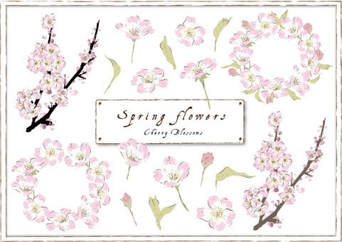 Spring Material _ Sakura