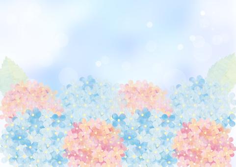 Hydrangea _ pastel _ blue background
