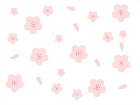 春天滿是櫻花