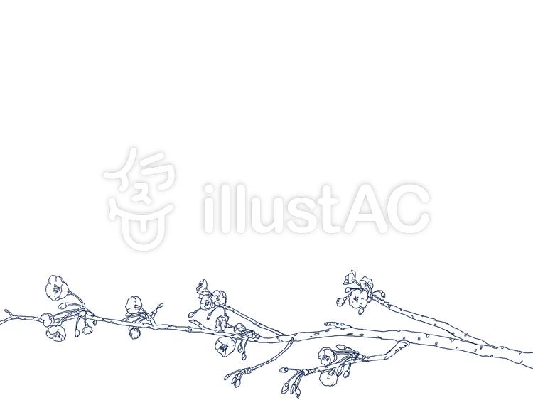 桜の枝ぬりえイラスト No 399373無料イラストならイラストac