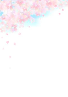 櫻花437