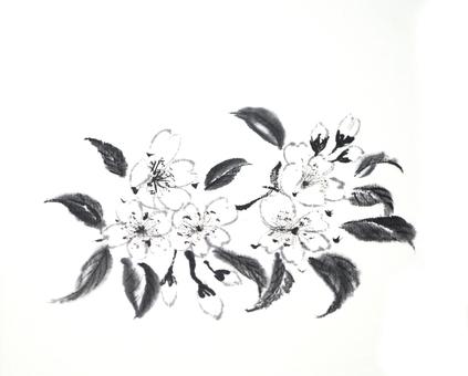 Sakura ink painting