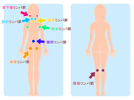Whole body lymph node
