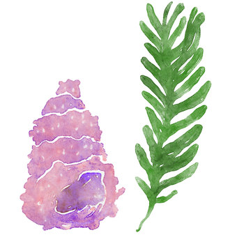 Seaweed and snails watercolor ①