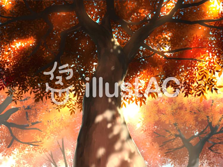 見上げる木 紅葉