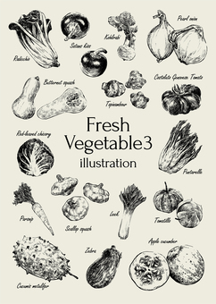 新鮮野菜イラスト3