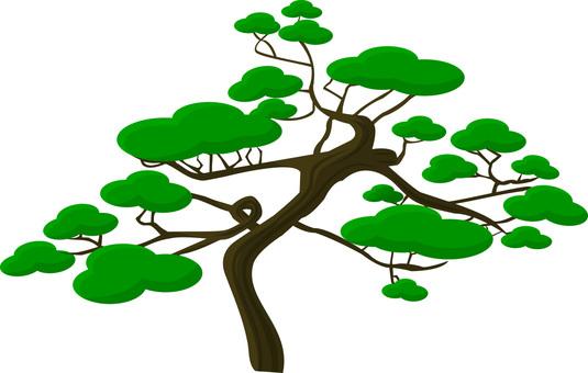 Japanese garden series Pine trees