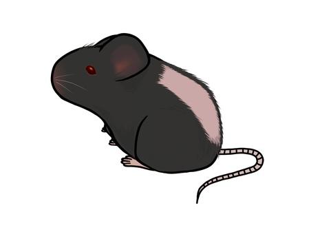 동물 실험 쥐 제모