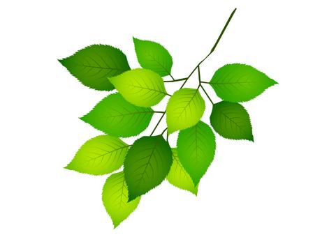 Fresh green material 263
