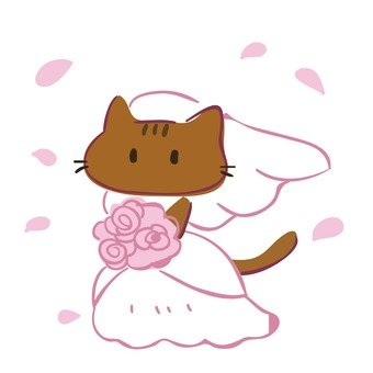 June bride bride and groom cat