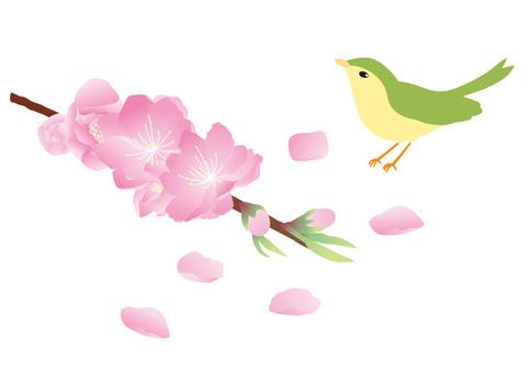 Peach blossoms and birds