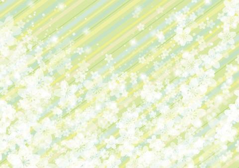 Sakura 39 - striped green
