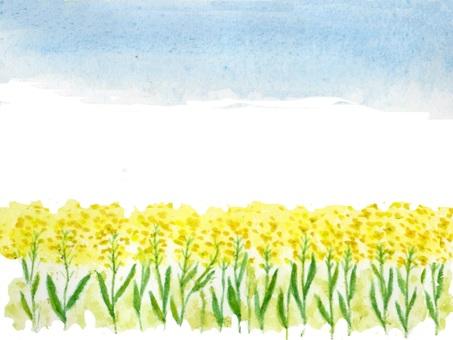 Rape flower landscape