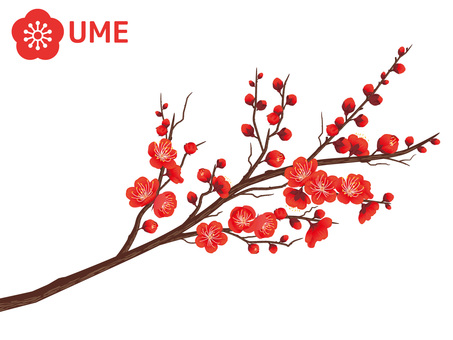 Cut out branches of Xin Chun plum _ red plum 01