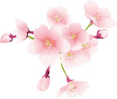 u_ Sakura 02
