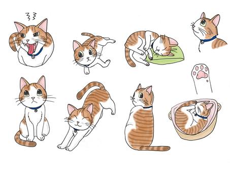 화이트 × 차 고양이