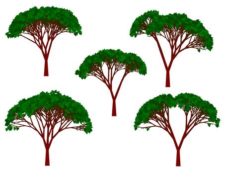 Tree Illustration 16