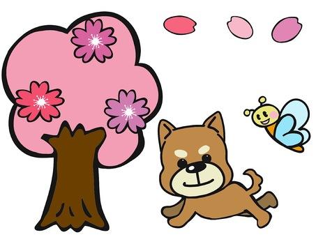 벚꽃과 완코와 나비