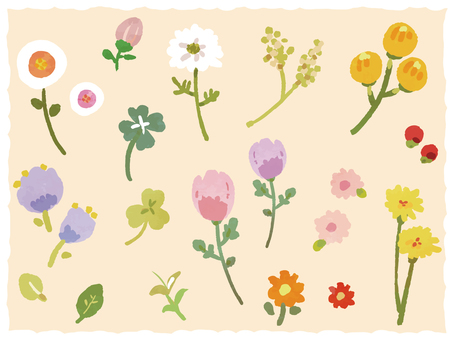 Flower of spring field
