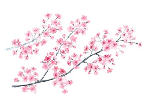 桜の木 水墨画 彩墨画