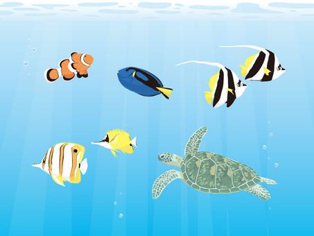 Tropical fish set