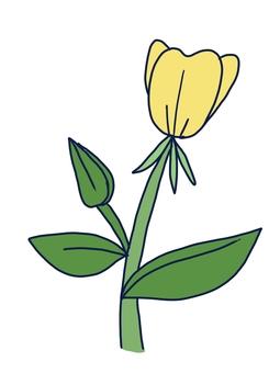 Evening primrose (evening primrose)