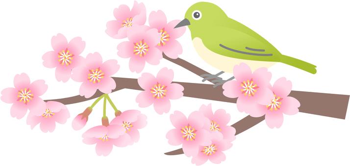 櫻桃樹和mezzo 6