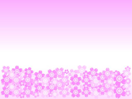 櫻桃背景61