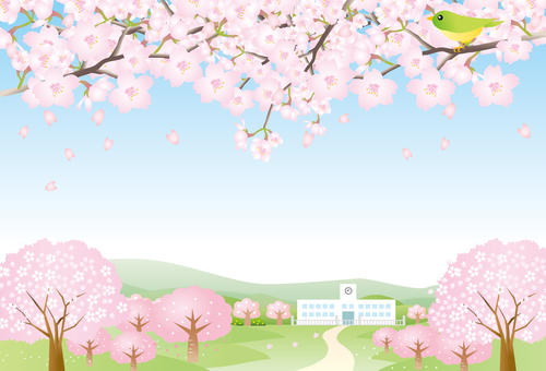 Cherry blossom road and school and blue sky