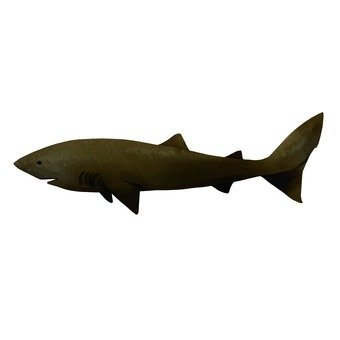 Rat shark