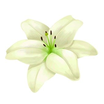 Up of white lilies