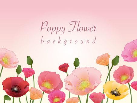 poppy bg02