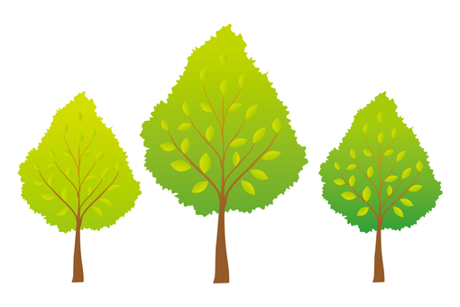 Three kinds of green trees